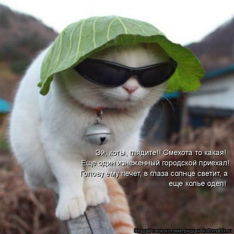 Котоматрица: Эй, коты, глядите!! Смехота то какая! Еще один изнеженный городской приехал! Голову ему печет, в глаза солнце светит, а еще колье одел!