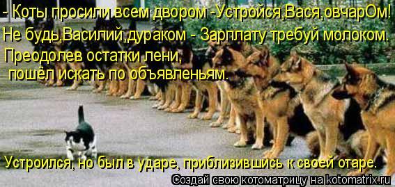 Котоматрица: - Коты просили всем двором -Устройся,Вася,овчарОм! Не будь,Василий,дураком - Зарплату требуй молоком. Преодолев остатки лени,  пошёл искать п
