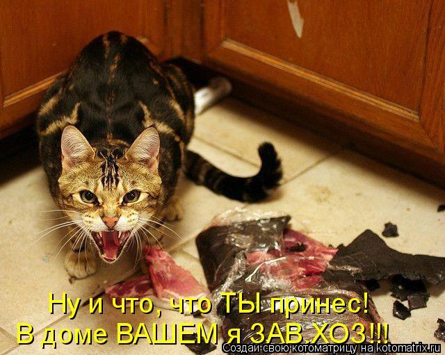 Котоматрица - Ну и что, что ТЫ принес! В доме ВАШЕМ я ЗАВ.ХОЗ!!!