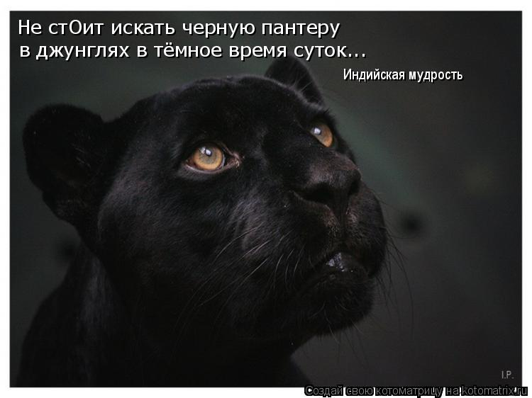 Котоматрица: Не стОит искать черную пантеру в джунглях в тёмное время суток... Индийская мудрость