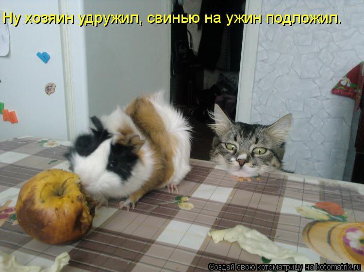Котоматрица: Ну хозяин удружил, свинью на ужин подложил.