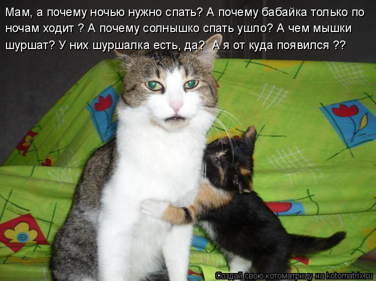 Котоматрица: Мам, а почему ночью нужно спать? А почему бабайка только по  ночам ходит ? А почему солнышко спать ушло? А чем мышки  шуршат? У них шуршалка ест