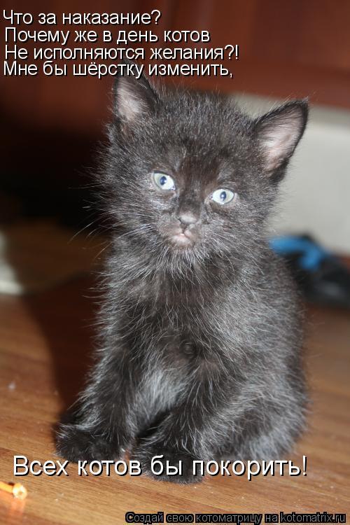 Котоматрица: Что за наказание? Почему же в день котов Не исполняются желания?! Мне бы шёрстку изменить, Всех котов бы покорить!