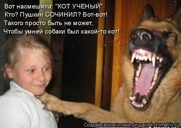 """Котоматрица: Вот насмешила: """"КОТ УЧЕНЫЙ"""" Кто? Пушкин СОЧИНИЛ? Вот-вот! Такого просто быть не может, Чтобы умней собаки был какой-то кот!"""