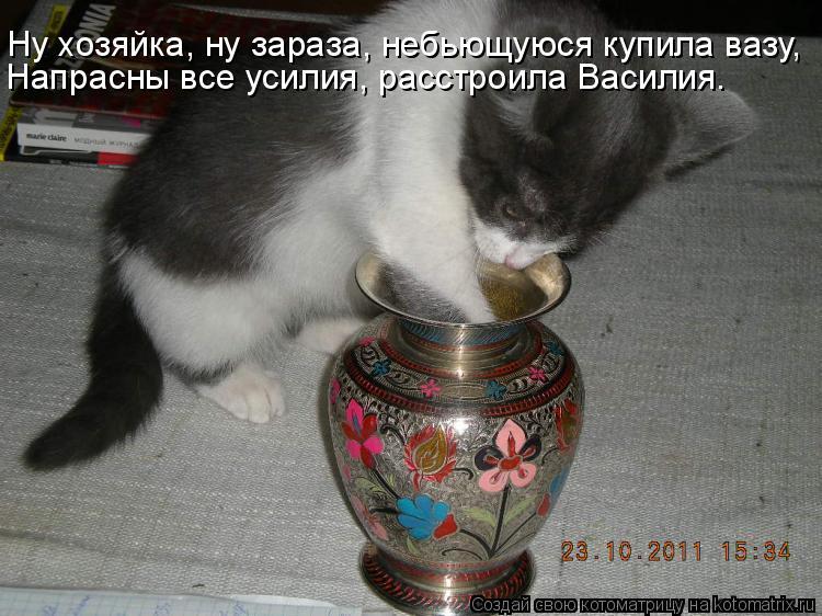 Котоматрица: Ну хозяйка, ну зараза, небьющуюся купила вазу, Напрасны все усилия, расстроила Василия.