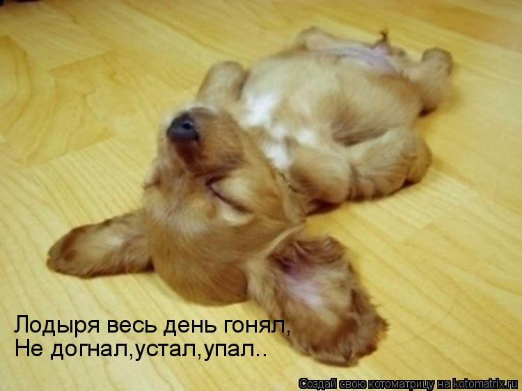 Котоматрица: Лодыря весь день гонял, Не догнал,устал,упал..