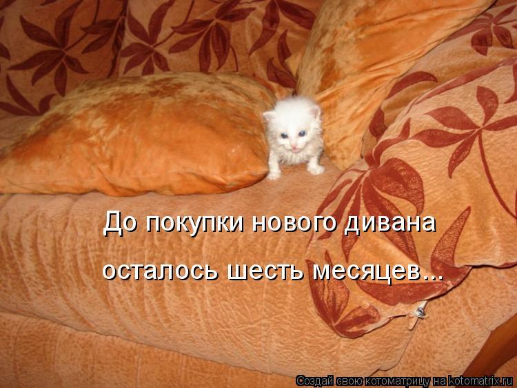 Котоматрица - До покупки нового дивана  осталось шесть месяцев...