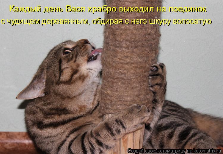 Котоматрица - Каждый день Вася храбро выходил на поединок  с чудищем деревянным, обд