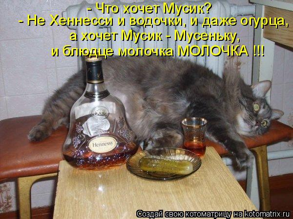 Котоматрица: - Что хочет Мусик? - Не Хеннесси и водочки, и даже огурца, а хочет Мусик - Мусеньку, и блюдце молочка МОЛОЧКА !!!