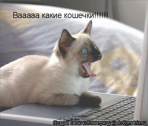 Котоматрица: Вааааа какие кошечки!!!!!!