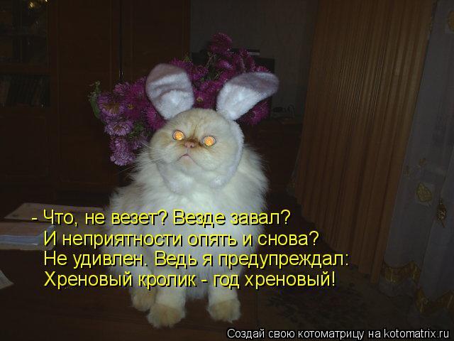 Котоматрица: И неприятности опять и снова?  Не удивлен. Ведь я предупреждал: - Что, не везет? Везде завал?  Хреновый кролик - год хреновый!