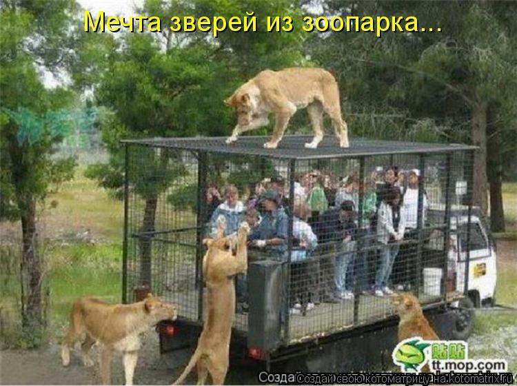 Котоматрица: Мечта зверей из зоопарка...