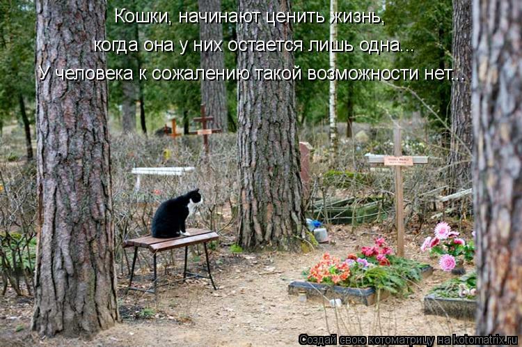 Котоматрица: Кошки, начинают ценить жизнь, когда она у них остается лишь одна... У человека к сожалению такой возможности нет...
