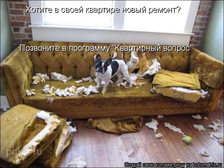 """Котоматрица: Хотите в своей квартире новый ремонт? Позвоните в программу """"Квартирный вопрос"""""""