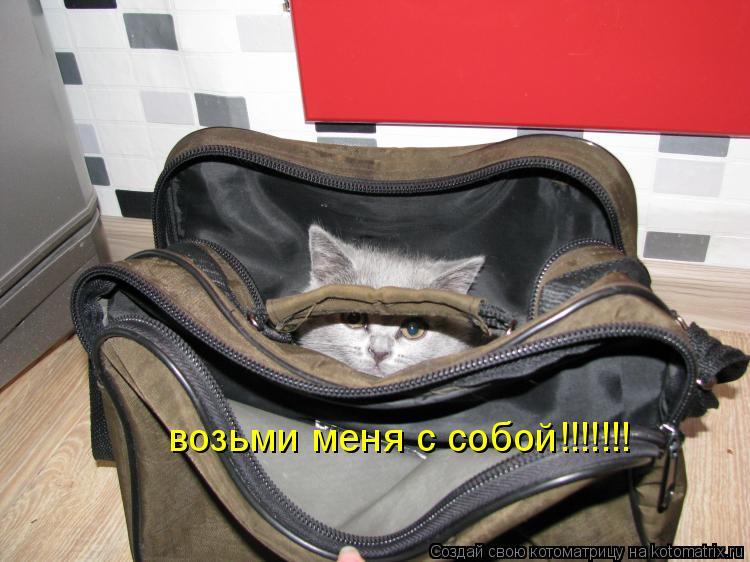 Котоматрица: возьми меня с собой!!!!!!!