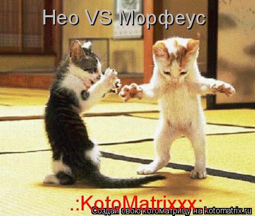Котоматрица: Нео VS Морфеус .:KotoMatrixxx:.