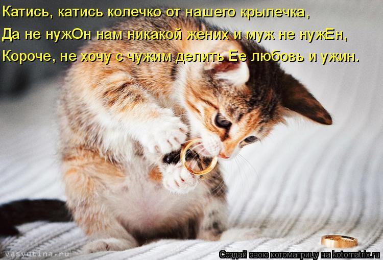 Котоматрица - Катись, катись колечко от нашего крылечка, Да не нужОн нам никакой жен