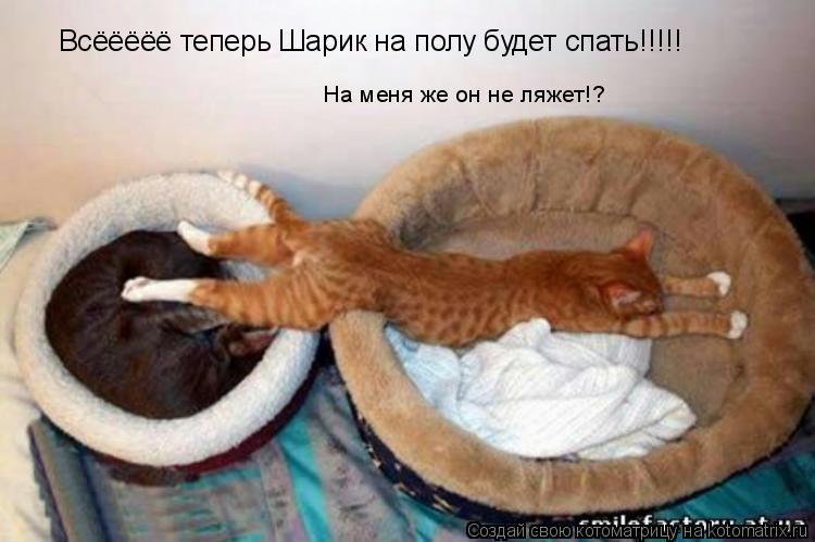 Котоматрица: Всёёёёё теперь Шарик на полу будет спать!!!!! На меня же он не ляжет!?