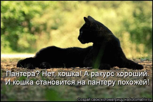 Котоматрица: Пантера? Нет, кошка! А ракурс хороший. И кошка становится на пантеру похожей!