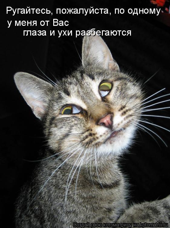 Котоматрица - Ругайтесь, пожалуйста, по одному у меня от Вас  глаза и ухи разбегаютс