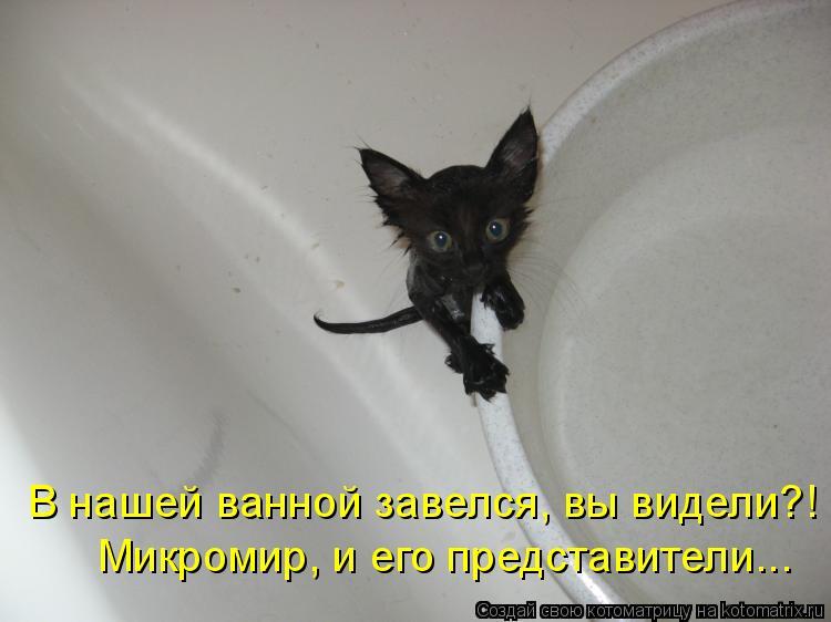 Котоматрица - Микромир, и его представители... В нашей ванной завелся, вы видели?!