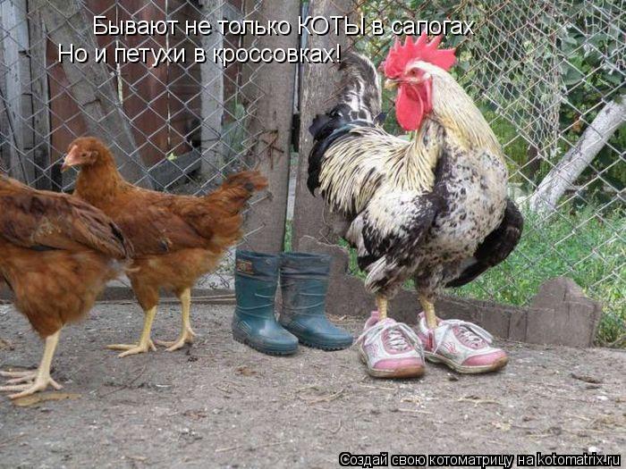 Котоматрица: Бывают не только КОТЫ в сапогах Но и петухи в кроссовках!