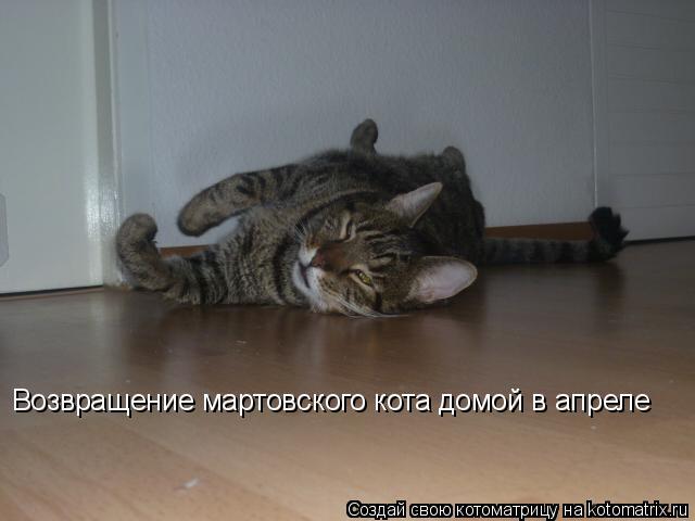 Котоматрица: Возвращение мартовского кота домой в апреле