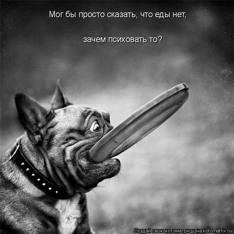 Котоматрица - Мог бы просто сказать, что еды нет, зачем психовать то?