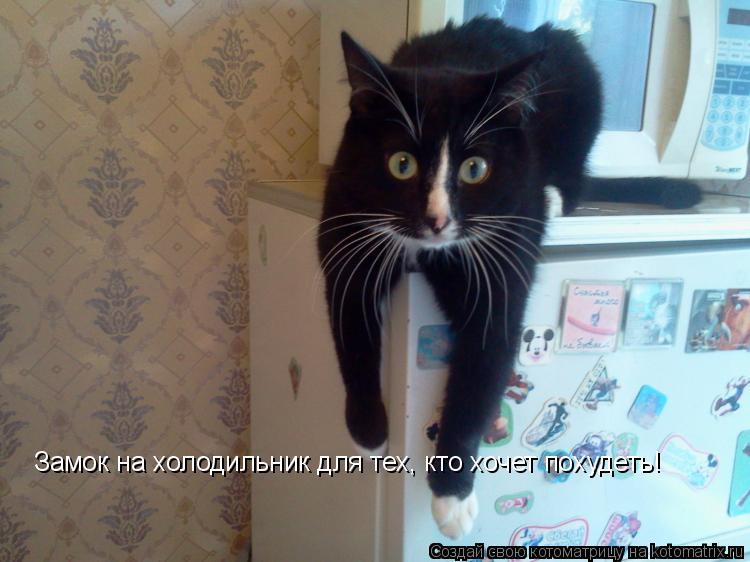 Котоматрица: Замок на холодильник для тех, кто хочет похудеть!