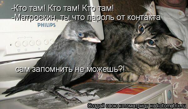 Котоматрица: -Кто там! Кто там! Кто там! -Матроскин, ты что пароль от контакта  сам запомнить не можешь?!