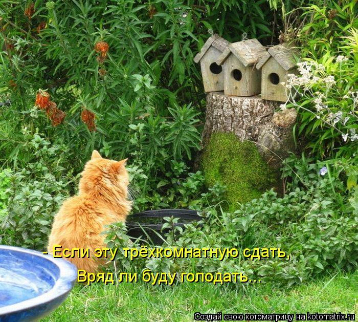 Котоматрица: - Если эту трёхкомнатную сдать, Вряд ли буду голодать...