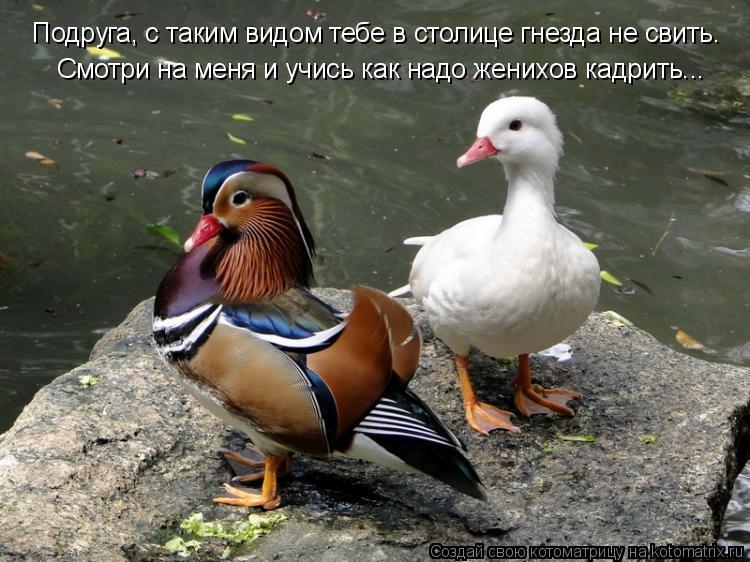 Котоматрица: Подруга, с таким видом тебе в столице гнезда не свить. Смотри на меня и учись как надо женихов кадрить...