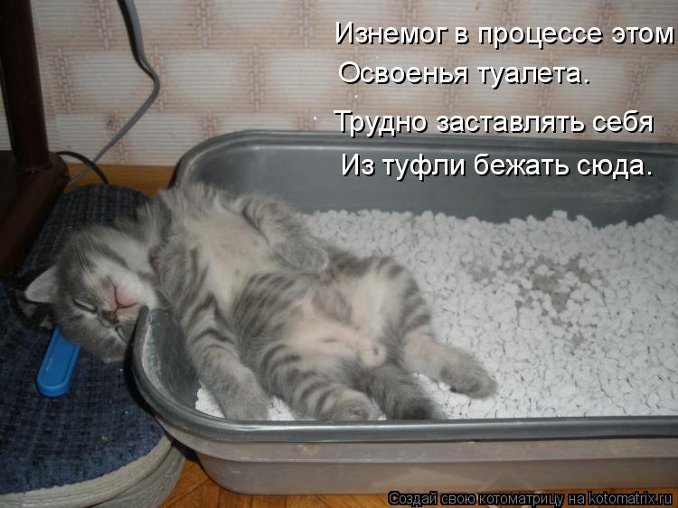 Котоматрица - Изнемог в процессе этом Освоенья туалета. Трудно заставлять себя Из ту