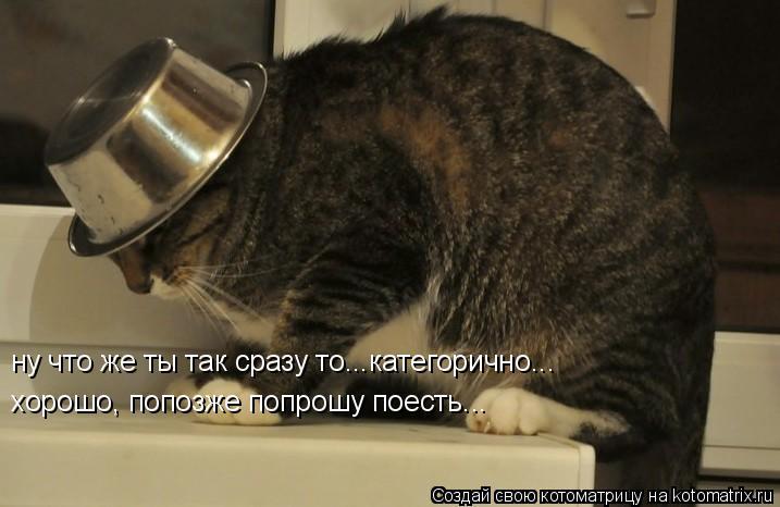 Котоматрица: ну что же ты так сразу то...категорично... хорошо, попозже попрошу поесть...