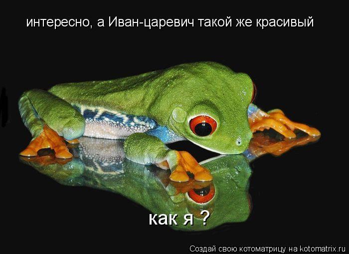 Котоматрица: интересно, а Иван-царевич такой же красивый как я ?