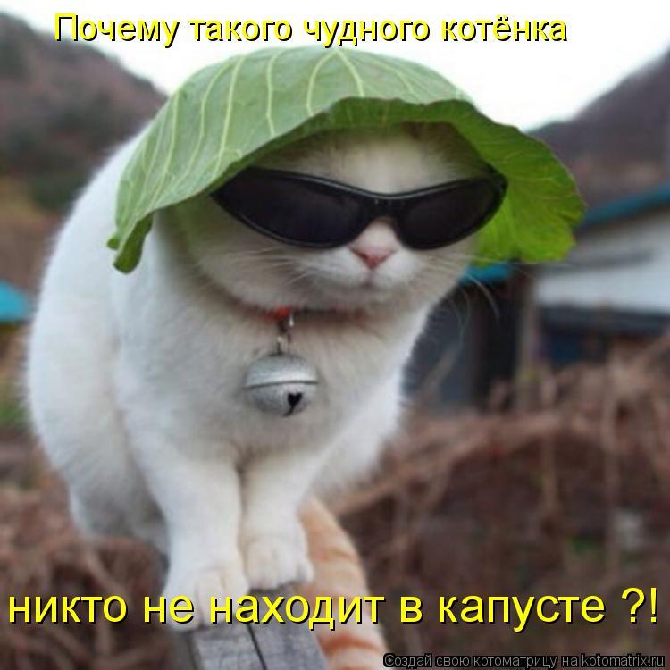 Котоматрица: Почему такого чудного котёнка никто не находит в капусте ?!
