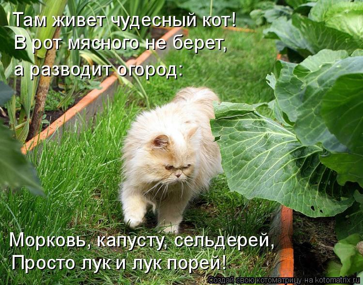 Котоматрица: Там живет чудесный кот! В рот мясного не берет, а разводит огород:  Морковь, капусту, сельдерей, Просто лук и лук порей!