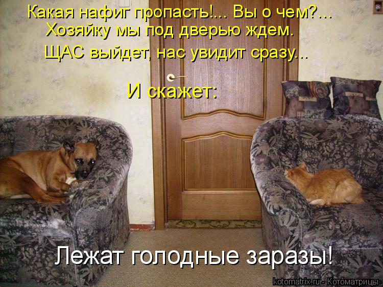 Котоматрица - Какая нафиг пропасть!... Вы о чем?... Хозяйку мы под дверью ждем. ЩАС