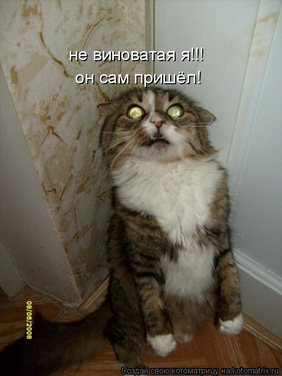 Котоматрица: не виноватая я!!! он сам пришёл!
