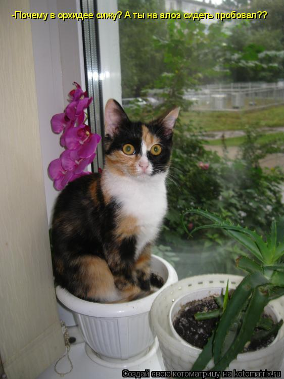 Котоматрица - -Почему в орхидее сижу? А ты на алоэ сидеть пробовал??