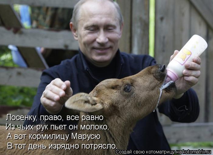 Котоматрица: Лосенку, право, все равно  Из чьих рук пьет он молоко. А вот кормилицу Марусю В тот день изрядно потрясло.