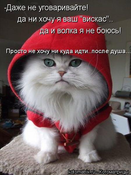 "Котоматрица: -Даже не уговаривайте! да ни хочу я ваш ""вискас"".. да и волка я не боюсь! Просто не хочу ни куда идти..после душа..."