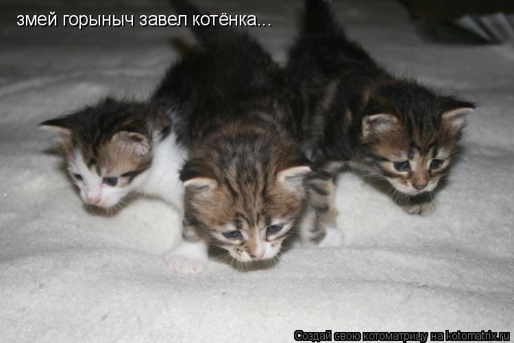 Котоматрица: змей горыныч завел котёнка...