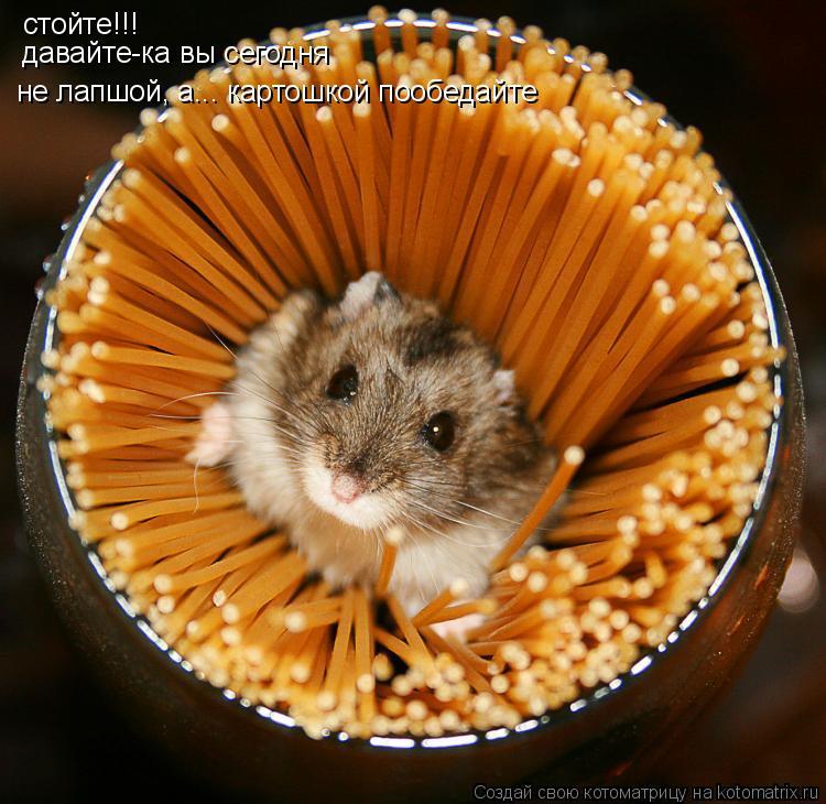 Котоматрица: стойте!!! давайте-ка вы сегодня не лапшой, а... картошкой пообедайте