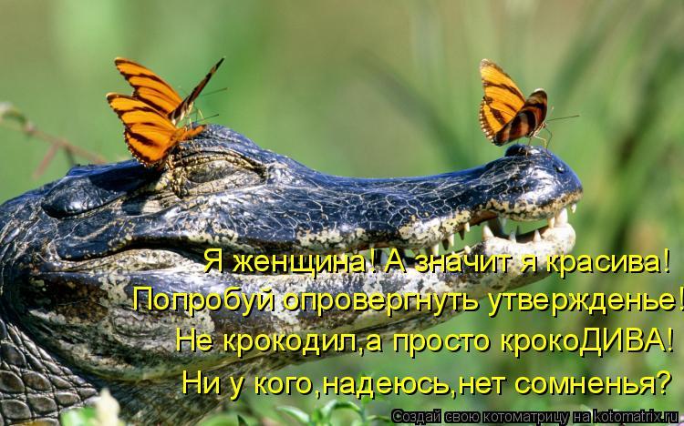 Котоматрица: Я женщина! А значит я красива! Попробуй опровергнуть утвержденье! Не крокодил,а просто крокоДИВА! Ни у кого,надеюсь,нет сомненья?