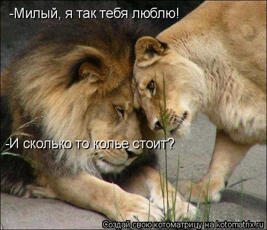 Котоматрица: -Милый, я так тебя люблю! -И сколько то колье стоит?