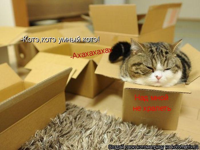 Котоматрица: Над мной  не храпеть -Ахахахахах -Котэ,котэ умный котэ!