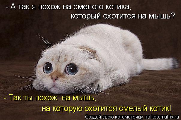 Котоматрица - - А так я похож на смелого котика, который охотится на мышь? - Так ты