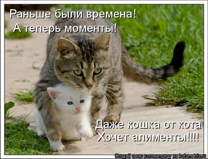 Котоматрица: Раньше были времена!  А теперь моменты!  Даже кошка от кота   Хочет алименты!!!!