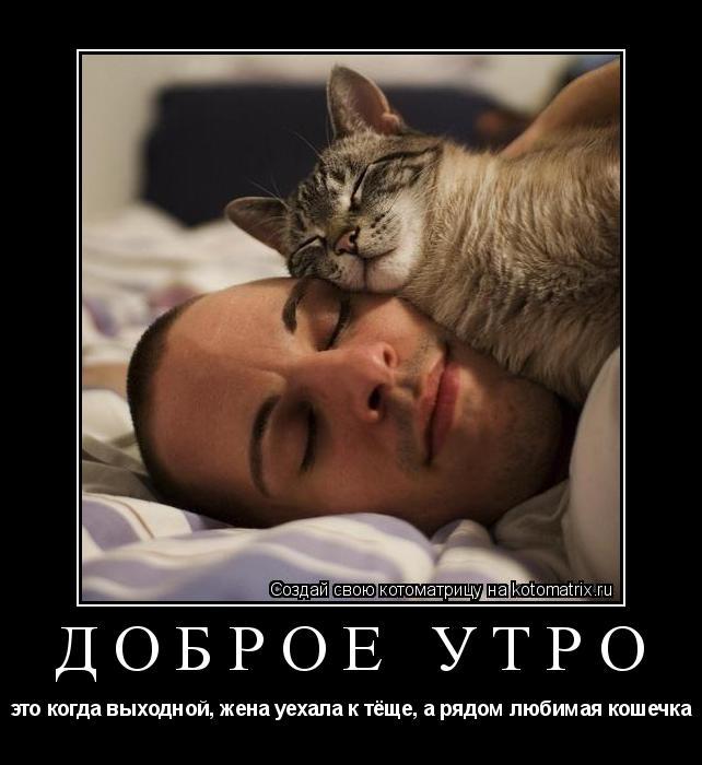 Котоматрица: Доброе утро это когда выходной, жена уехала к тёще, а рядом любимая кошечка